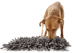 """A """"Snuffle Mat"""" is a great alternative to bowl feeding and supports a dog's natural desire to forage for food."""