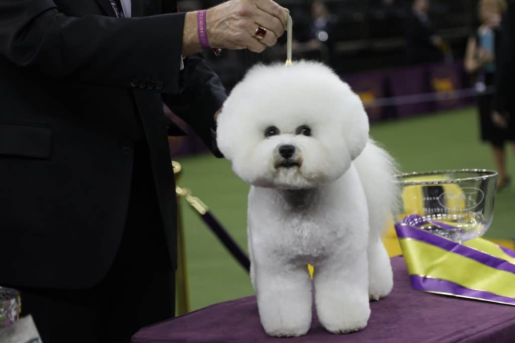Westminster Dog Show: Curiosities, Tricks, and Secrets from