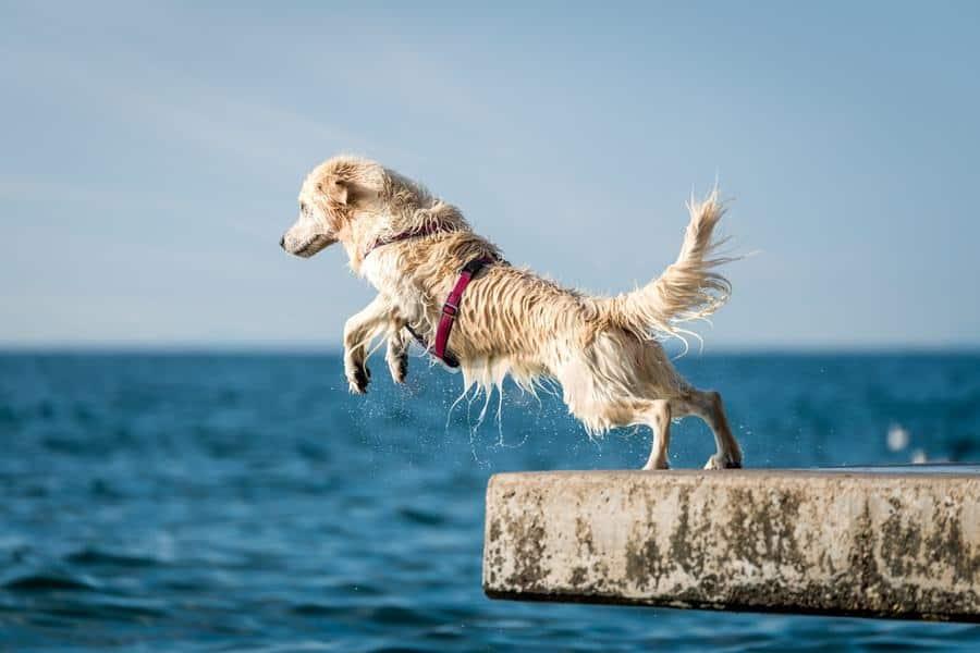 Using Turmeric Curcumin to Treat Canine Arthritis - The Dogington Post
