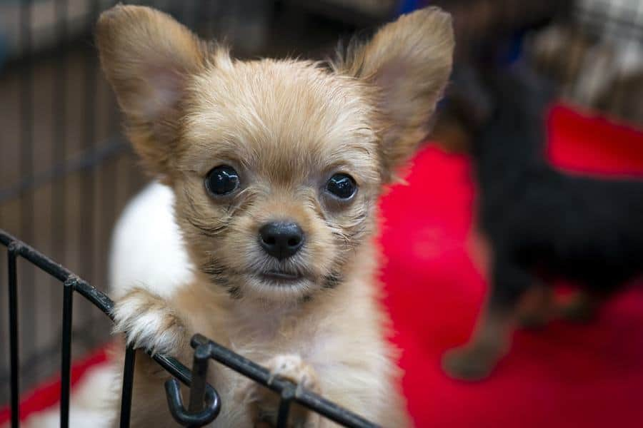 San Francisco Law Bans the Sale of Non-Rescue Dogs & Cats