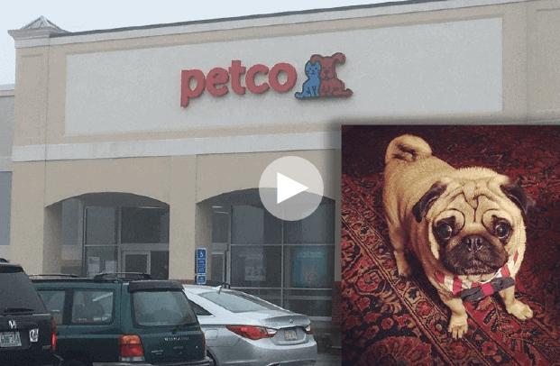 UPDATE: Dog Dies During Nail Trim at Petco Grooming Salon