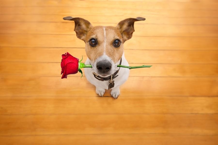 Does My Dog Love Me? 5 Signs You'll Recognize - The Dogington Post
