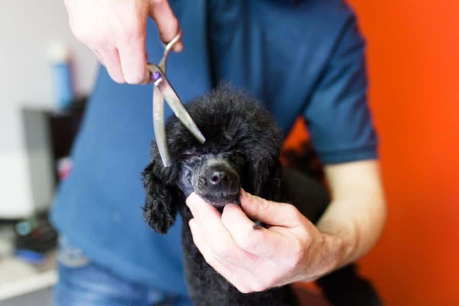 Proposed Legislation Would Require Dog Groomers to be Licensed - The