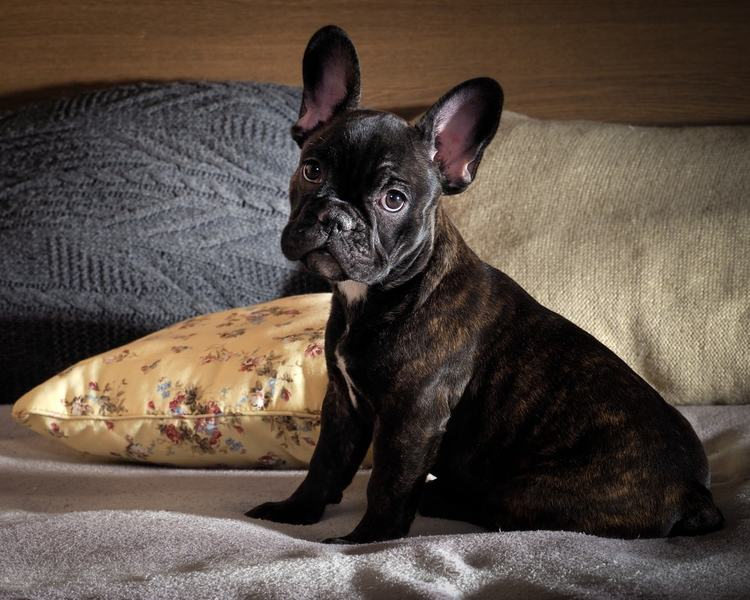 8 Quick Tips to Prevent Your House Smelling Like Dog