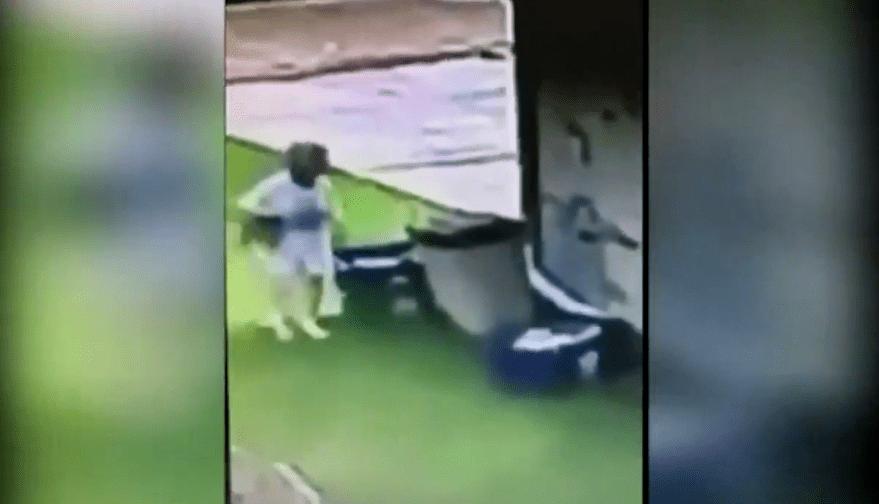 neighbor caught on tape