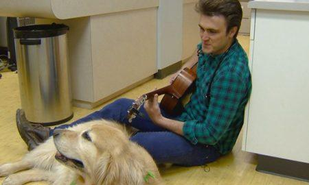 veterinarian calms anxious animals