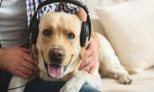 music pets like