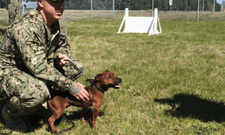 tiny military working dog