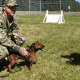 tiny military working dog