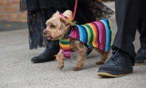dogs celebrating cinco de mayo