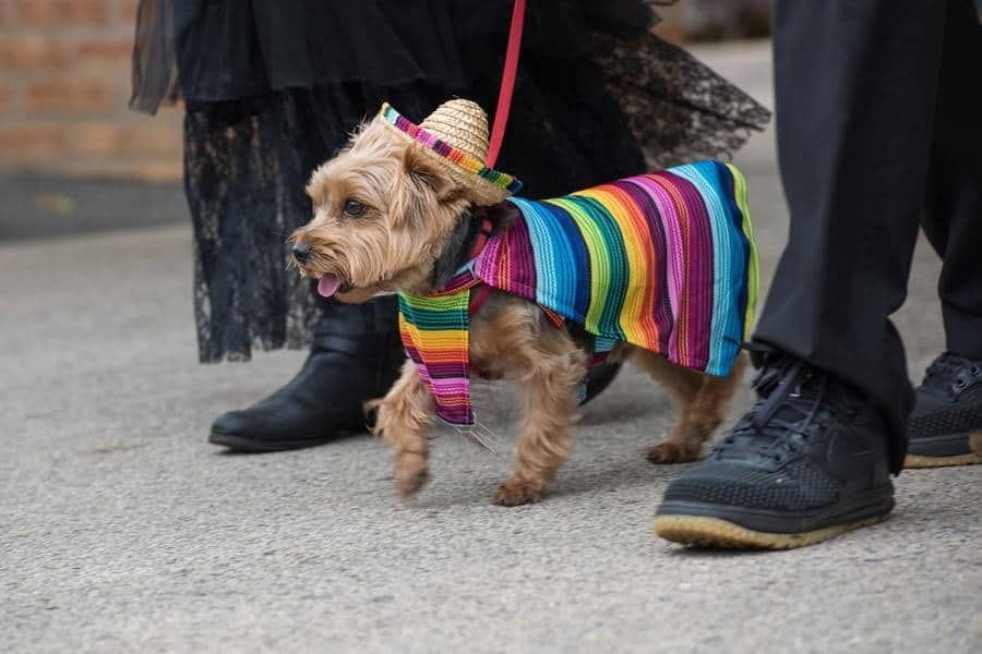 dogs celebrating cinco de mayo