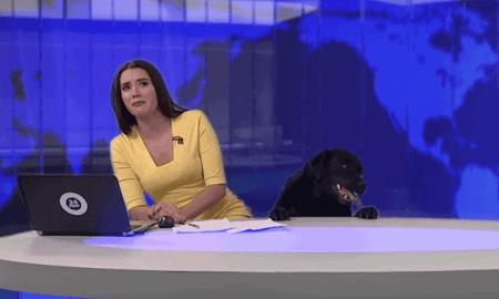 Dog Crashed Live News Broadcast