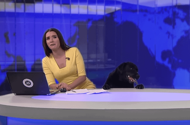 Dog Crashed Live News Broadcast