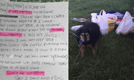 senior dog abandoned