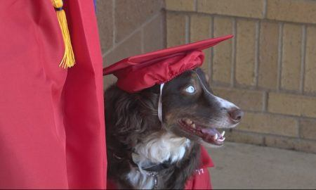 service dog graduated high school