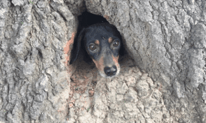 dog stuck in a tree