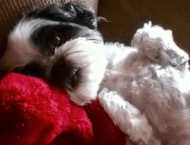 SPCA Investigating