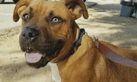 adopted dog dies