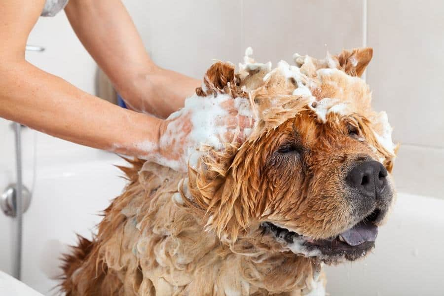 Is Baby Shampoo Safe to Use on Dogs