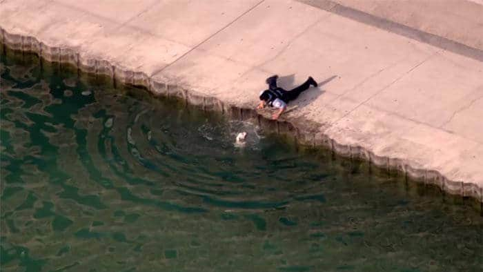 Cop Rescues Pit Bull From Drowning