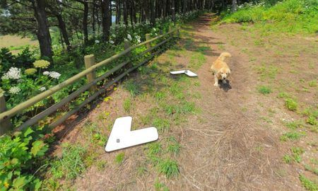 dog follows google street view