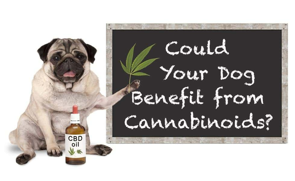 ARE THERE CANNABINOID RECEPTORS IN DOGS AND CATS?