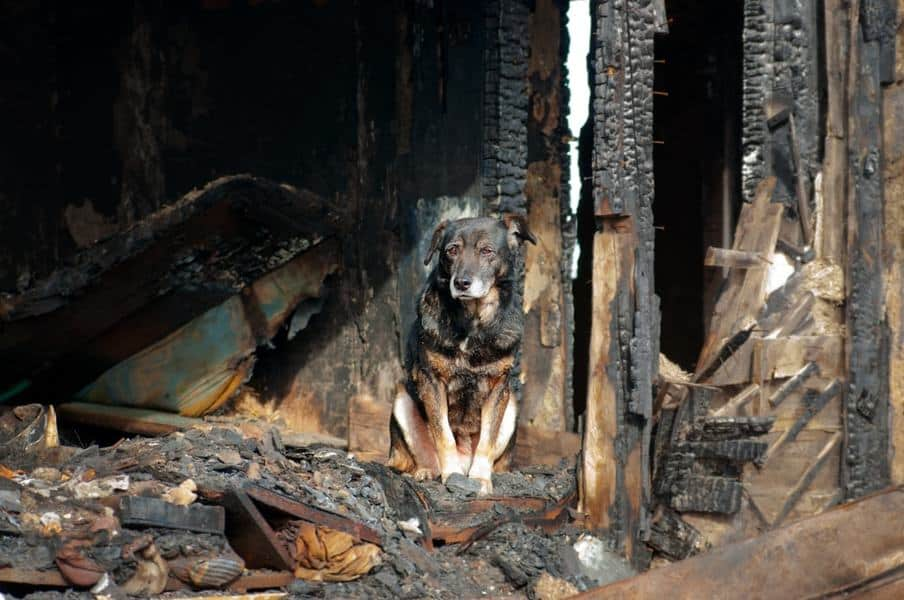The Three Biggest Fire Safety Mistakes Pet Parents Make