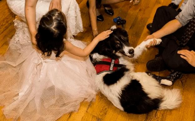 three-legged therapy dog