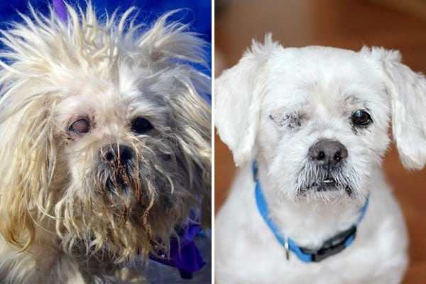 shelter dog makeovers