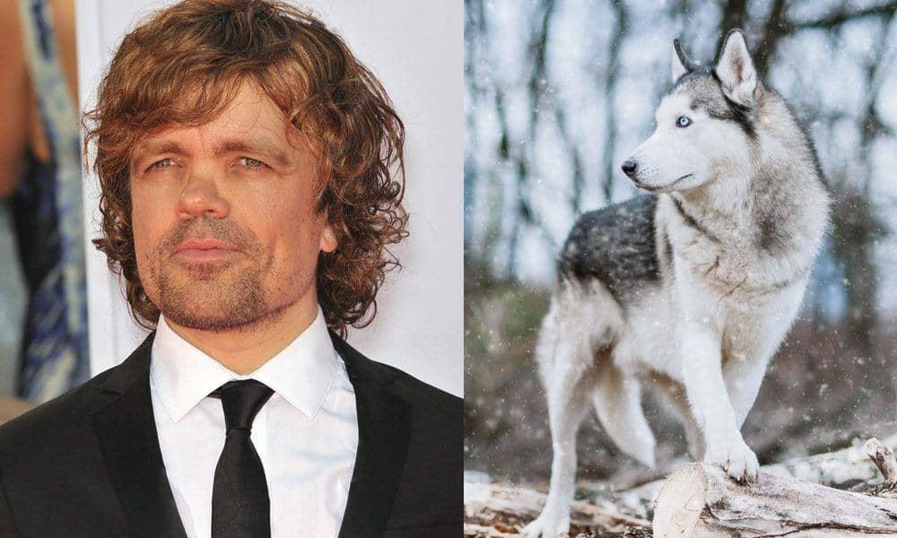 direwolf huskies