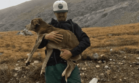 mountain climbers rescue dog