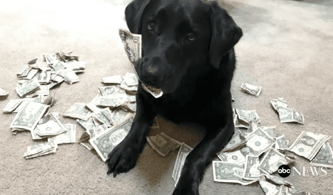 dog hoards cash