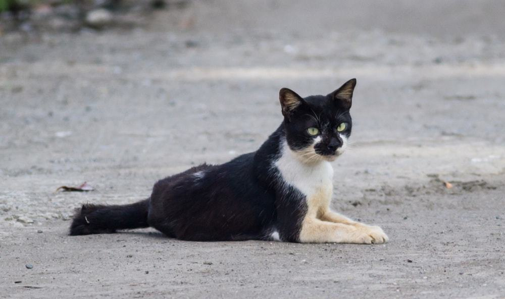 pets abandoned during irma