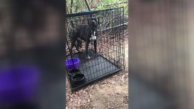 dog found caged
