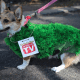 creative dog costumes
