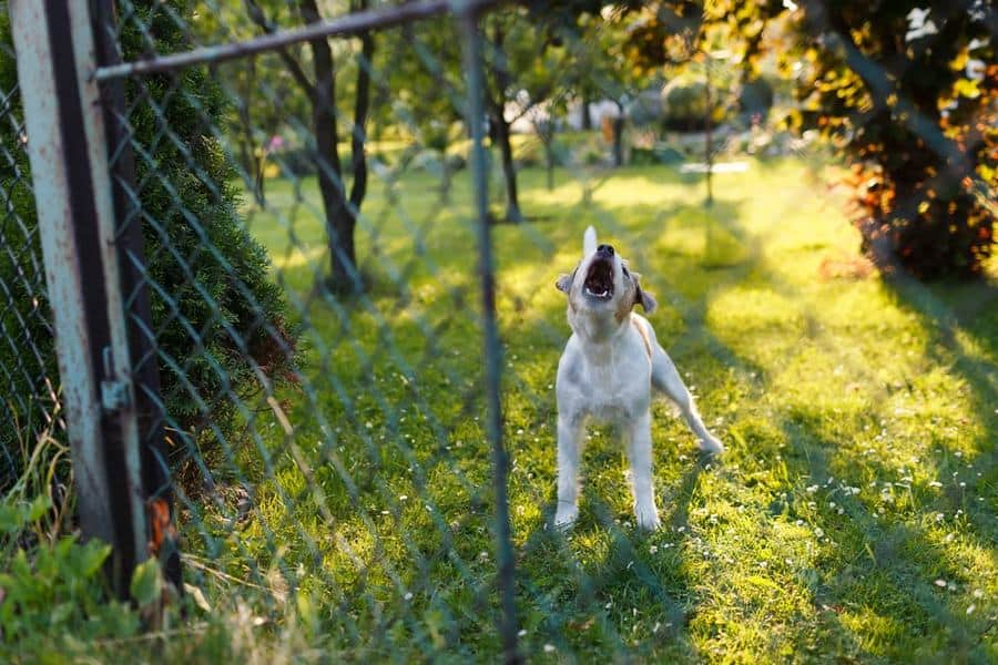 What to Do When Your Neighbor's Dog Won't Stop Barking - The