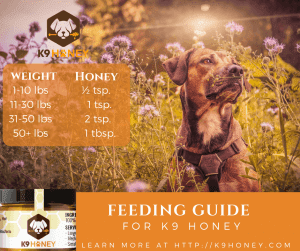honey for dogs