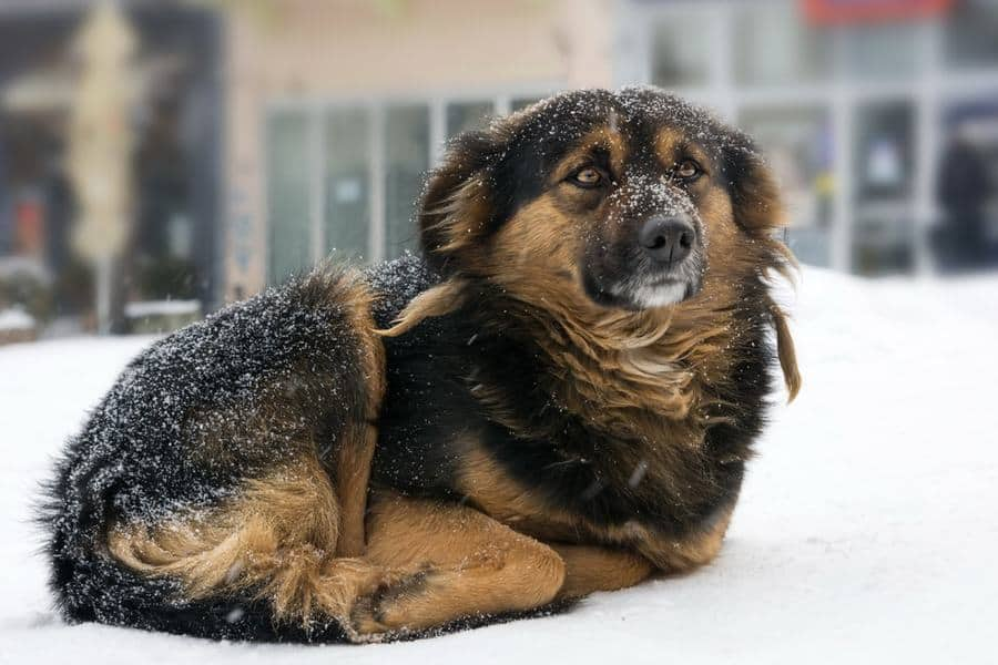 Pennsylvania Law Makes Leaving Dogs Out in the Cold a Felony