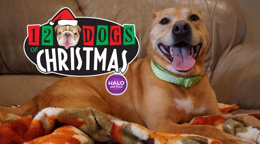 12 dogs of christmas