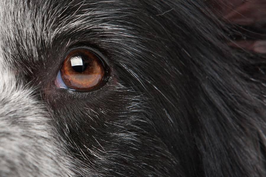 canine ear medication