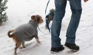 too cold to walk the dog