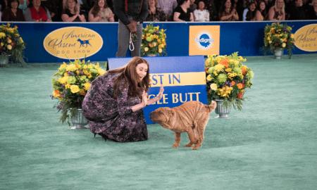 rescue dog show