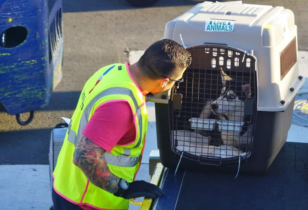 United Airlines Suspends Pet Transport Service After