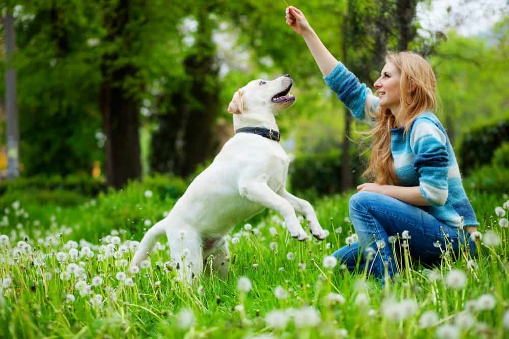 dog training myths