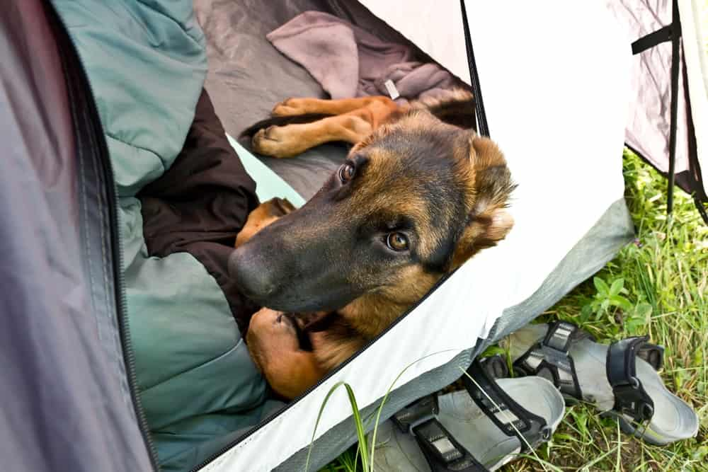 The Ultimate Guide to Camping With Your Dog