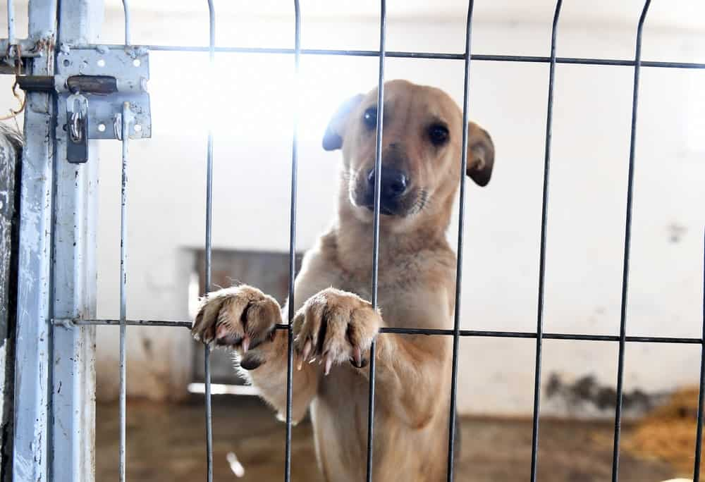 5 Ways to Help Shelter Dogs When You Can't Adopt