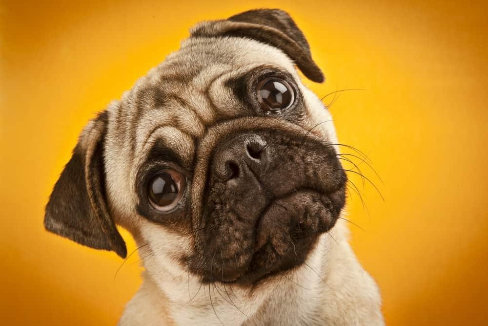 3 Ways to Avoid Ruining Your Dog
