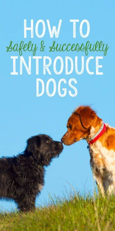 introducing dogs
