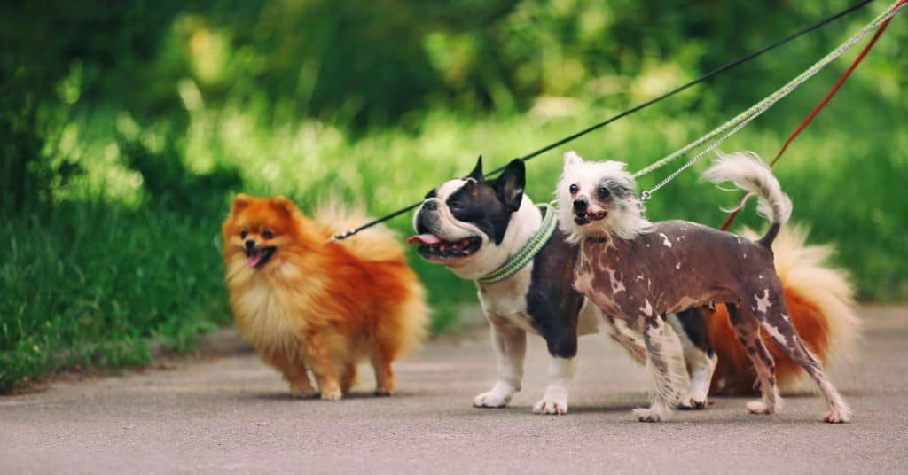 Tips and Tools to Stop Your Dog from Pulling the Leash