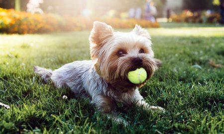 pet-safe lawn